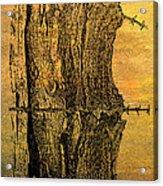 Barbed Life Acrylic Print