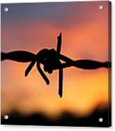 Barbed Silhouette Acrylic Print