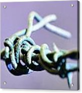 Barbed Violet Acrylic Print