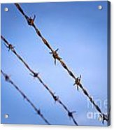 Barbed Wire Close Acrylic Print