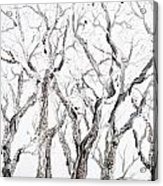 Bare Branches Print Option 2 Acrylic Print