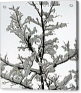 Bare Branches With Snow Acrylic Print