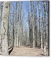 Bare Forest Acrylic Print