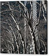 Bare Acrylic Print by Joanna Madloch