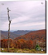 Bare Naked Tree Acrylic Print