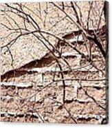 Bare Tree Adobe Wall Acrylic Print by Joe Kozlowski