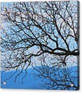 Bare Tree Against Blue Sky Acrylic Print