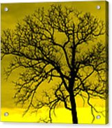Bare Tree Against Yellow Background E88 Acrylic Print