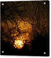 Bare Tree Branches With Winter Sunrise Acrylic Print