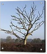 Bare Tree In Forest Acrylic Print