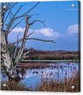Bare Tree In Marsh Acrylic Print
