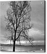 Bare Tree On A Wintery Tahoe Shoreline Acrylic Print