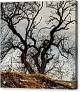 Bare Tree On The Hill Acrylic Print