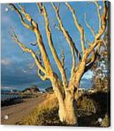 Bare Tree On The Spit Acrylic Print