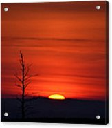 Bare Tree Sunrise Acrylic Print