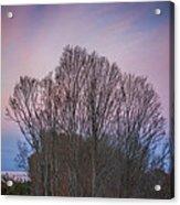 Bare Trees And Autumn Sky Acrylic Print
