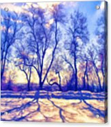 Bare Trees Acrylic Print