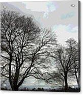 Bare Trees Winter Sky Acrylic Print