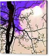Bare Winter Branches Acrylic Print by Michael Sokalski