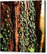 Bark And Ivy Acrylic Print by Jacqui Collett