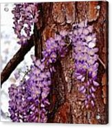 Bark Beauty Acrylic Print