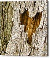 Bark Heart Acrylic Print