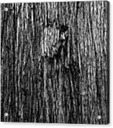 Bark Mark Acrylic Print