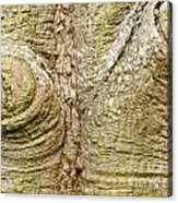 Bark Of Silk Floss Tree Background Texture Pattern Acrylic Print