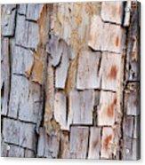 Bark On A Tree In The Desert In Sedona Acrylic Print