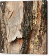 Bark X Acrylic Print