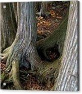 Barky Barky Trees Acrylic Print by Michelle Calkins