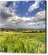 Barley View  Acrylic Print