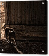 Barn Cat Acrylic Print by Theresa Tahara