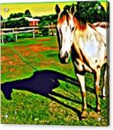 Barn Horse Acrylic Print