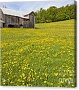 Barn In Dandelion Field Acrylic Print