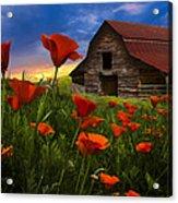 Barn In Poppies Acrylic Print