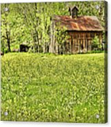 Barn In Wild Turnips Acrylic Print