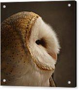 Barn Owl 3 Acrylic Print