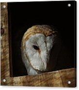 Barn Owl 5 Acrylic Print