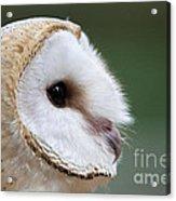 Barn Owl Closeup Portrait Acrylic Print