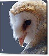 Barn Owl Dry Brushed Acrylic Print