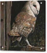 Barn Owl In The Old Barn Acrylic Print