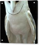 Barn Owl. Acrylic Print