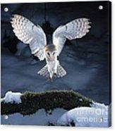Barn Owl Landing Acrylic Print
