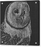 Barn Owl Acrylic Print by Lawrence Tripoli