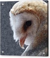 Barn Owl Painterly Acrylic Print