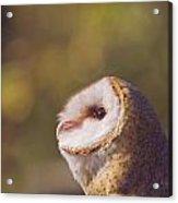Barn Owl Photo Millie Acrylic Print