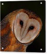 Barn Owl Portrait II Acrylic Print