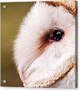 Barn Owl Profile Acrylic Print