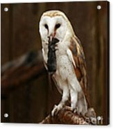 Barn Owl With Catch Of The Day Acrylic Print